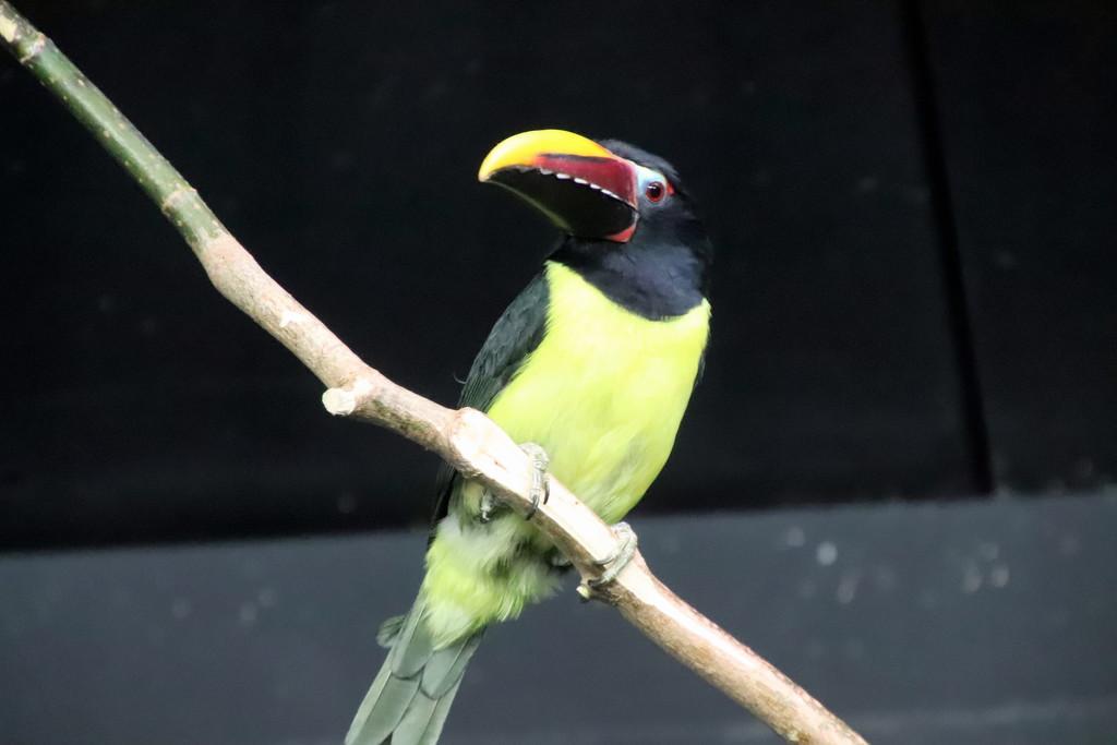 Exotic Bird by randy23