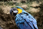 5th May 2020 - Macaw