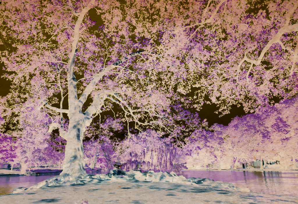 Inspired by wisteria by dustyloup
