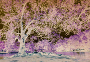 14th May 2020 - Inspired by wisteria
