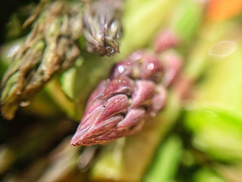 Purple asparagus.  by cocobella