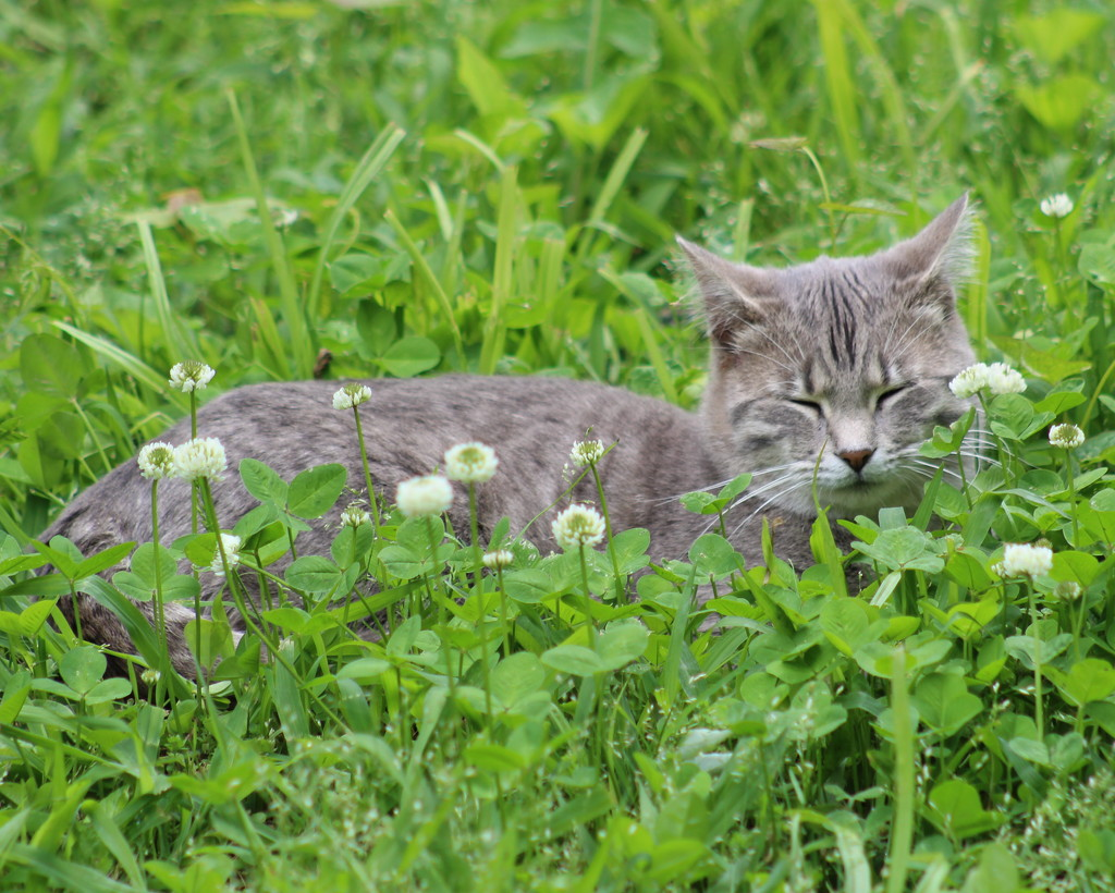 Tiny In Clover by cjwhite