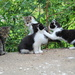 The Kitten Club