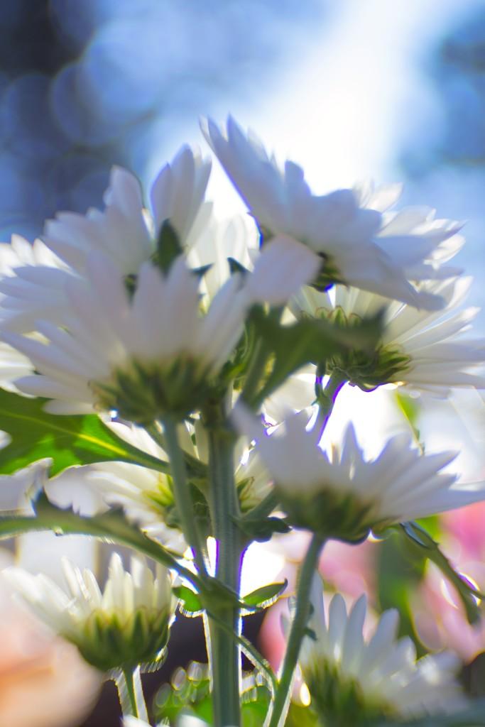 Just flowers by joysabin