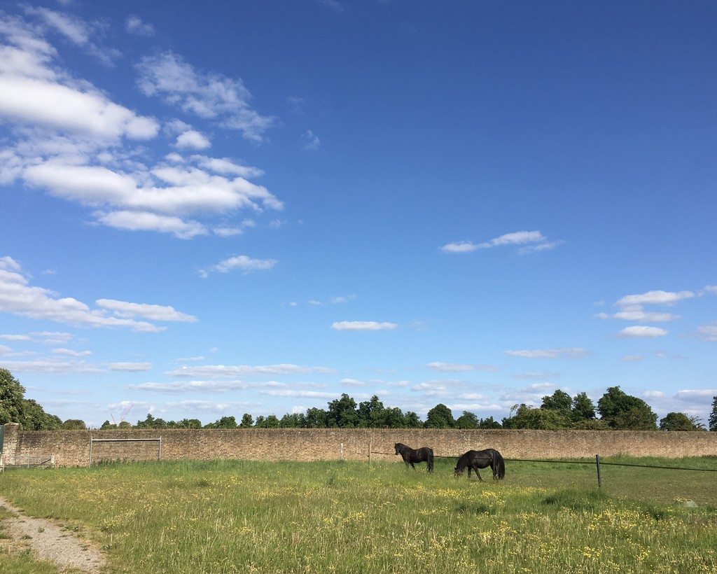 Horses  by ottery