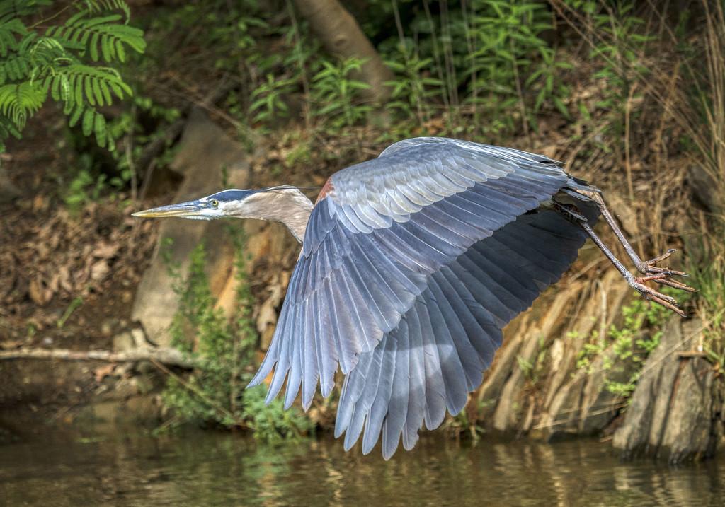 Majesty of Flight by kvphoto