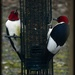 Red-headed Pair by olivetreeann