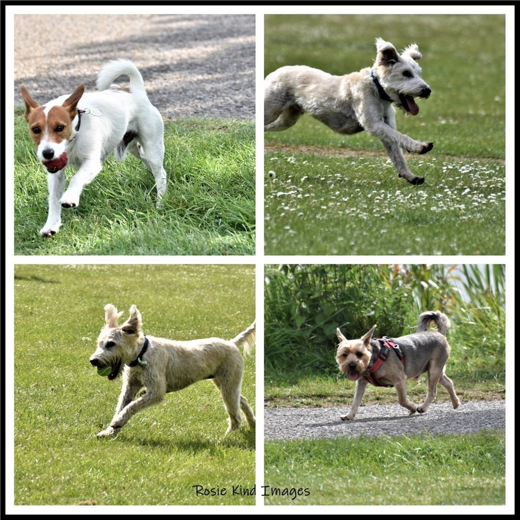 Dogs at Priory by rosiekind