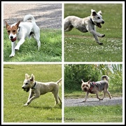 16th May 2020 - Dogs at Priory