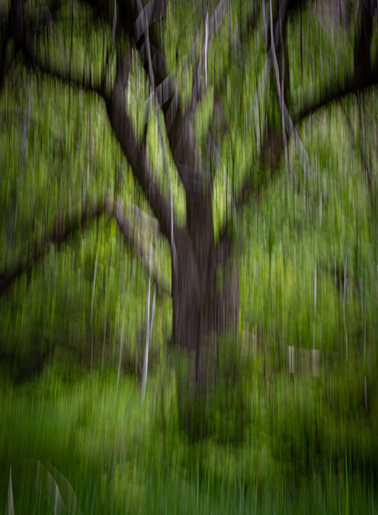 ICM of Old Heritage Apple Tree by 365karly1