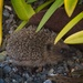 Hedgehog in the daytime