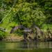 Osprey at the Lake