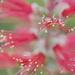 May Series - Macro my Garden (18)