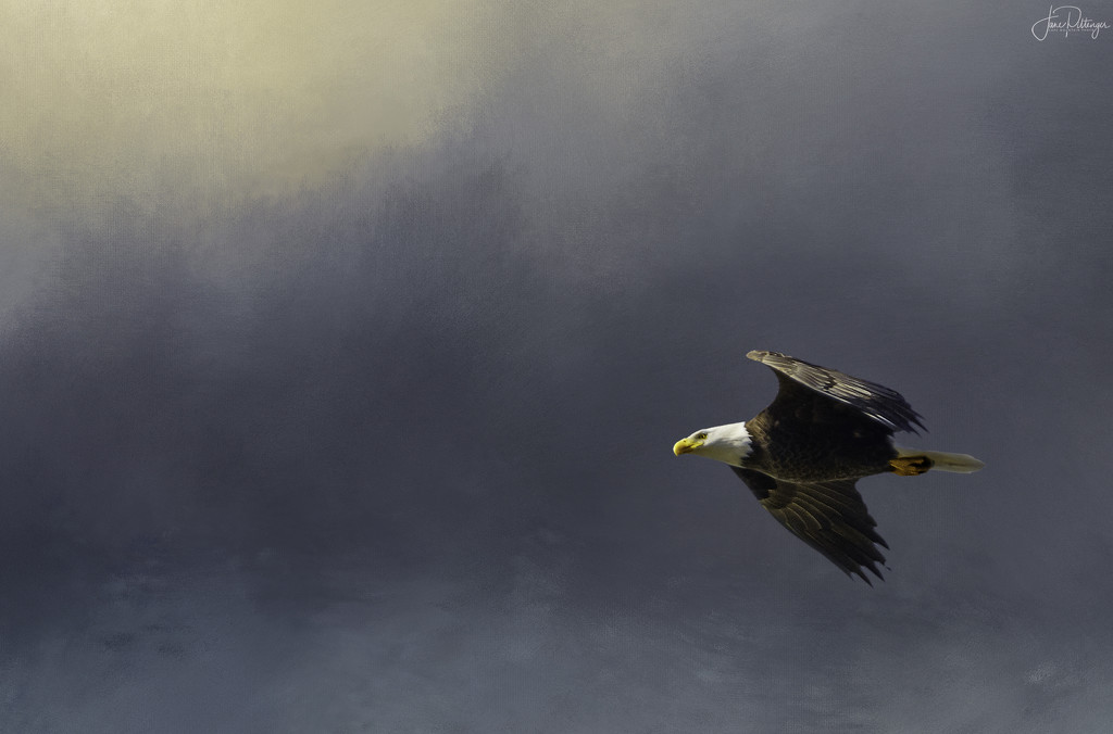 Bald Eagle In Flight with textures by jgpittenger