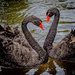 Mean Swans