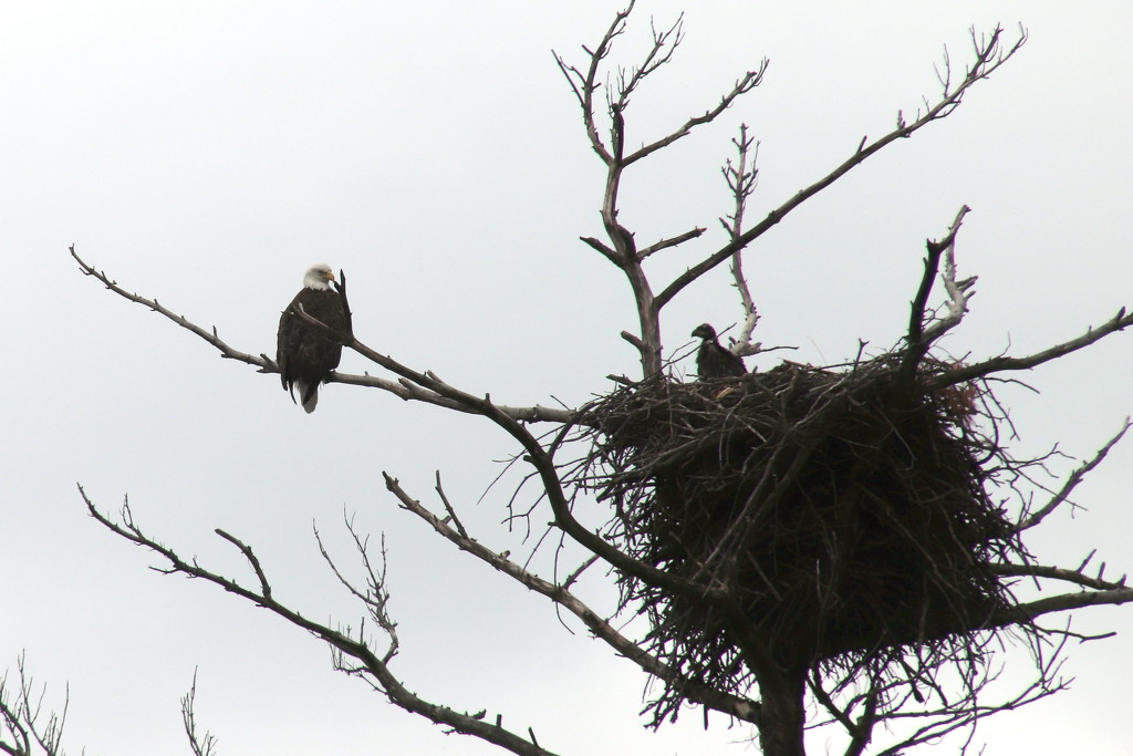 Eagle Nest by randy23