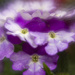 Slender Vervain Flower