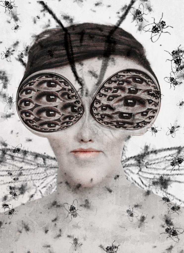 Flies bzzz by fiveplustwo