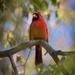 A Cardinal Visited