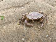 20th May 2020 - Crab
