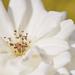 May Series - Macro my Garden (20)