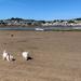 Sunny walk on the beach