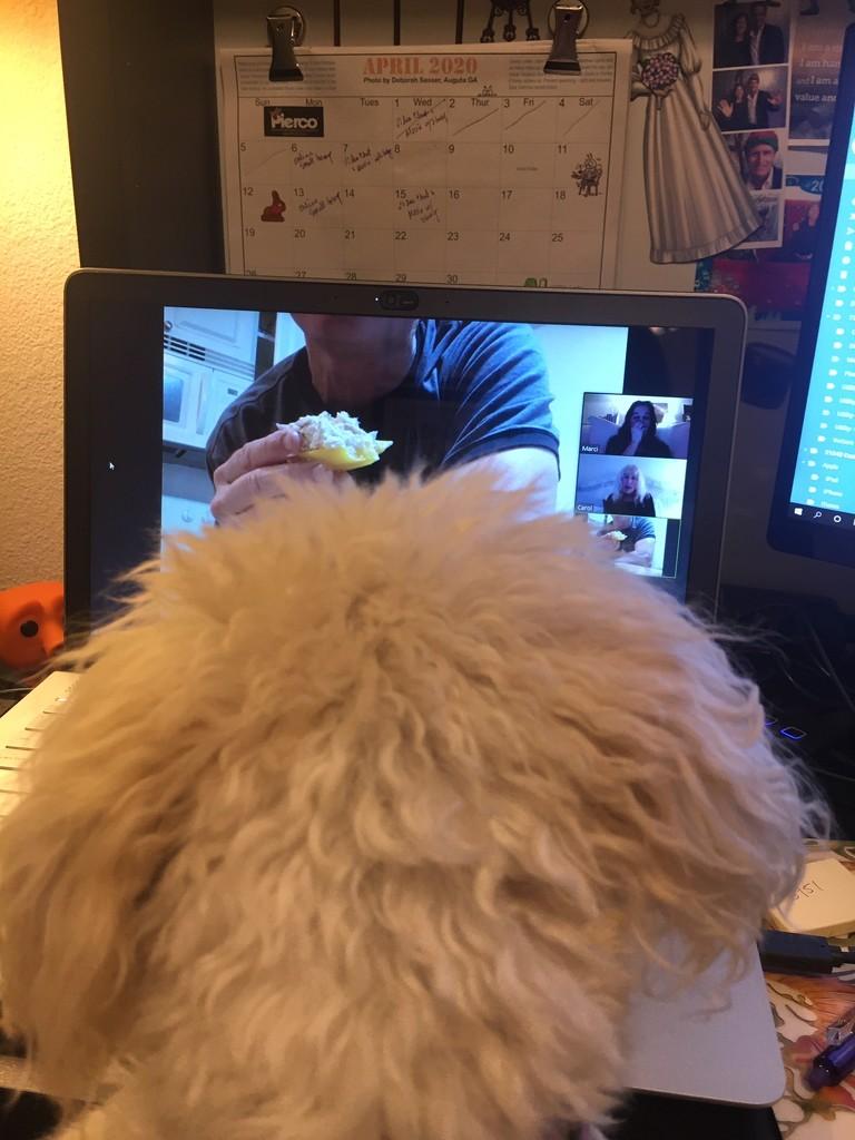 Zoom Puppy by msfyste