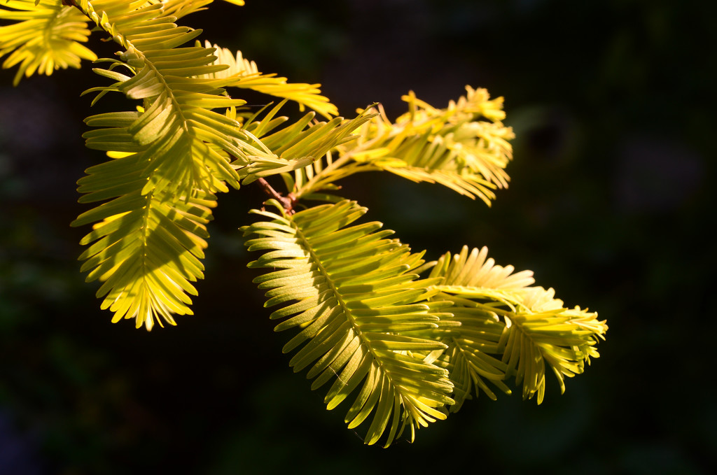 Sun through the Leaves by fbailey