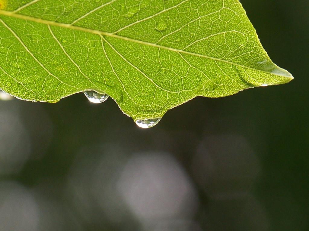 Rainy Days by marlboromaam