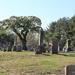 Y11 0520 Tree