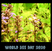 20th May 2020 - World Bee Day 2020