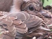 18th May 2020 - squab resize