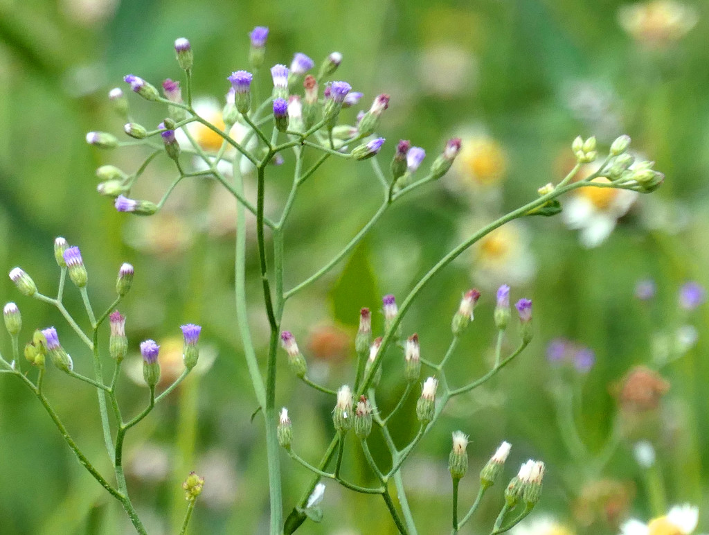 Weeds_2 by lilh