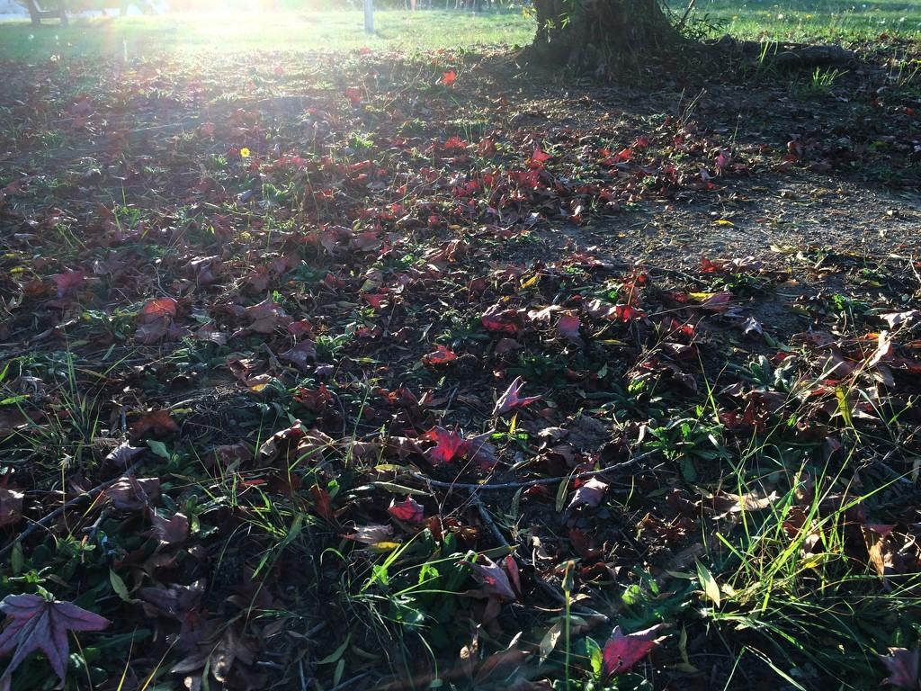 Fallen Leaves by lmsa