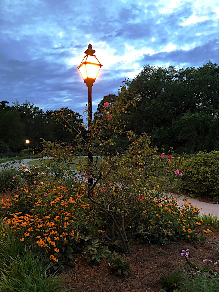 Hampton Park as sunset ended. by congaree
