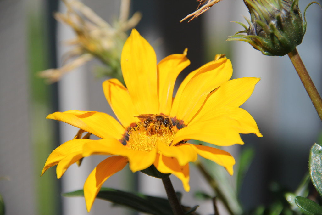 flower_bee by orion5d