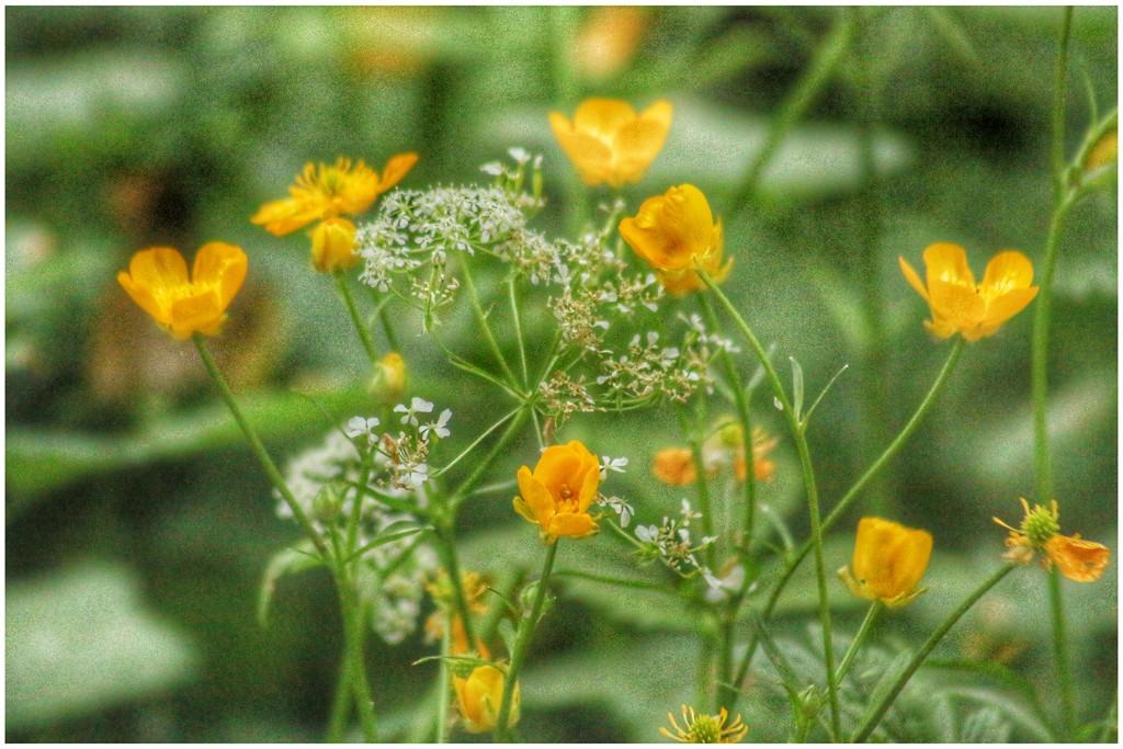 Pretty wild flowers! by lyndamcg
