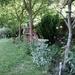 My Garden May 2020