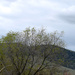 Half Sky/Half Dixon Area Hills