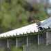 Sparrow On The Rooftop