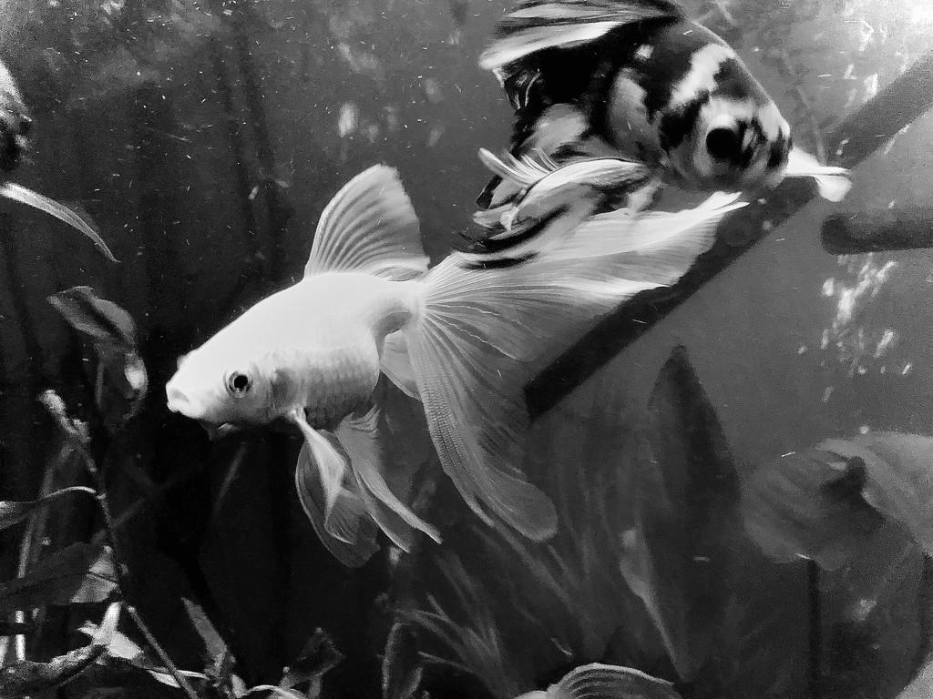 Fishies by tamaralea