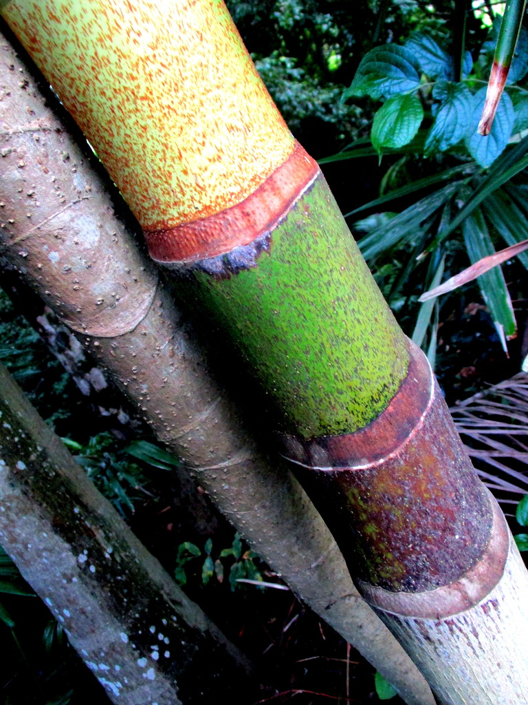 Love these Bamboo palms by 777margo