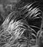 22nd May 2020 - Grass