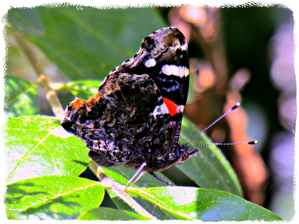 My 1st Butterfly 2020... by moviegal1