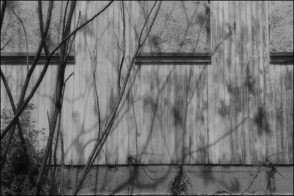 Sumac Shadows by olivetreeann