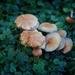 A multitude of mushrooms