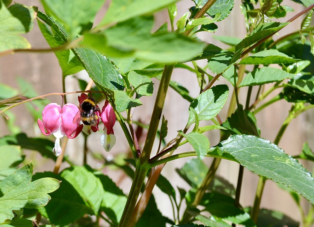 Busy bee. by wakelys