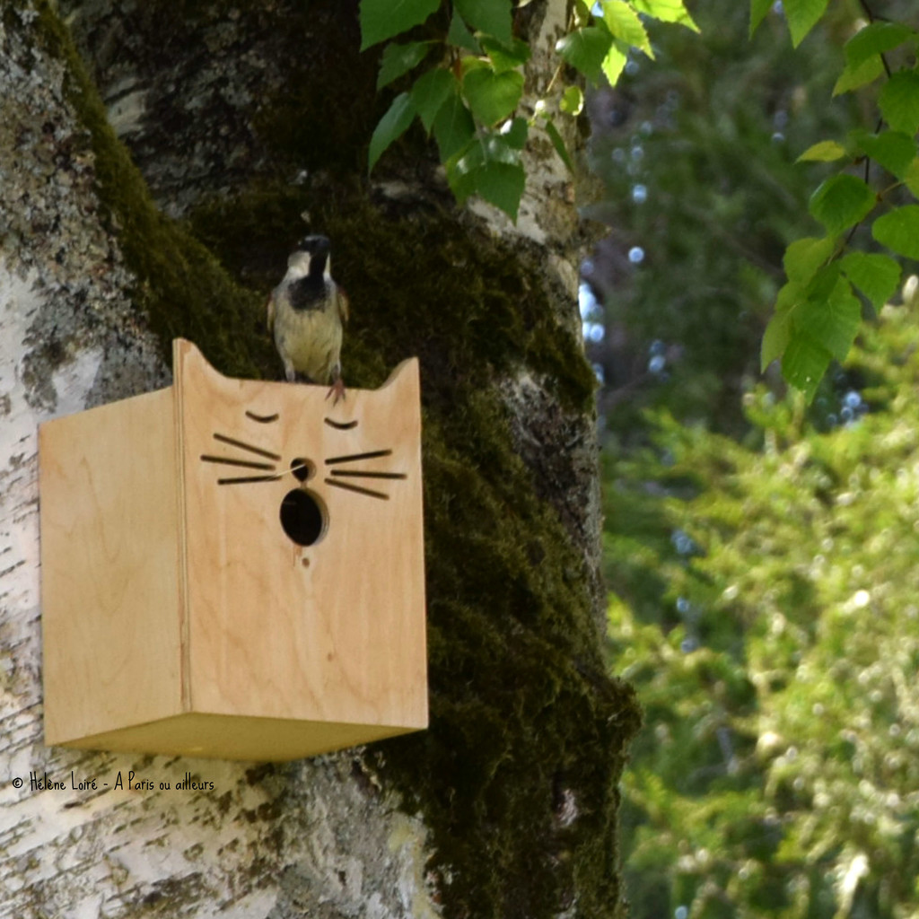just for fun! birdhouse! by parisouailleurs