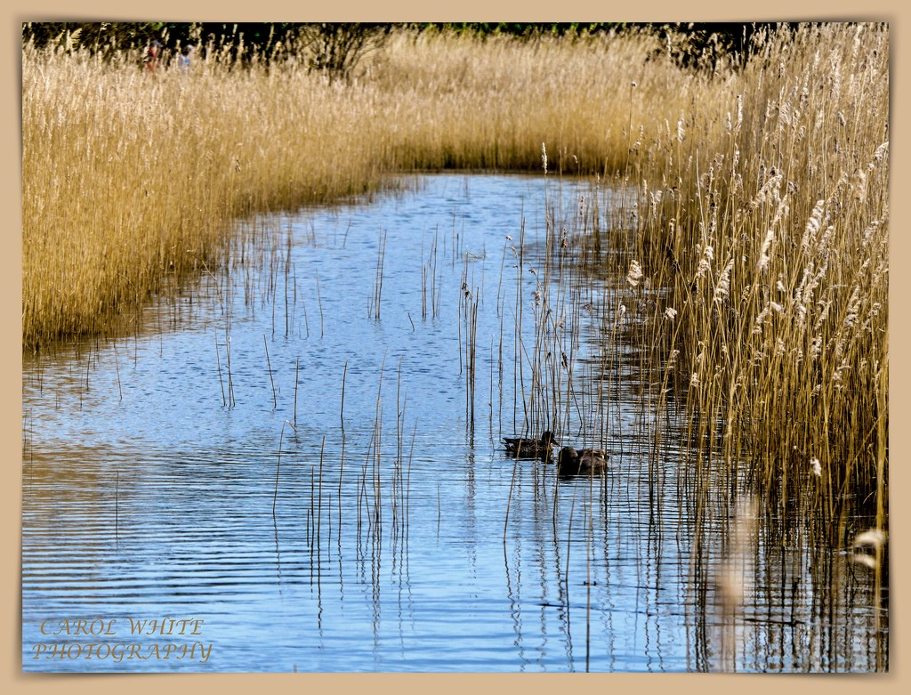 Radipole Nature Reserve by carolmw