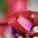 May Series - Macro my Garden (23)